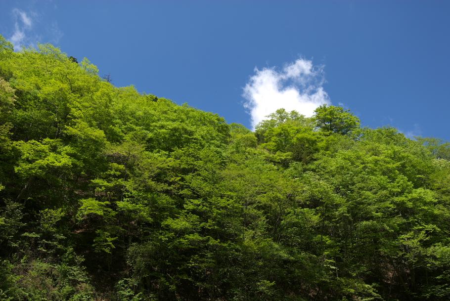 西沢渓谷 №6
